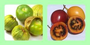 tomatillos-tamarillos